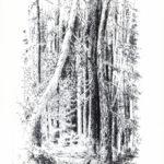 """""""Nel bosco N. 2"""", acquaforte su rame, mm 258x165 (Lastra), cm 50x35 (foglio), 1997 200 €"""