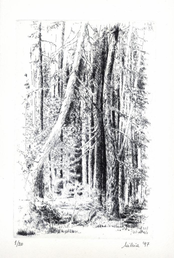 11-nel bosco n°2- mm. 258x165 -1997