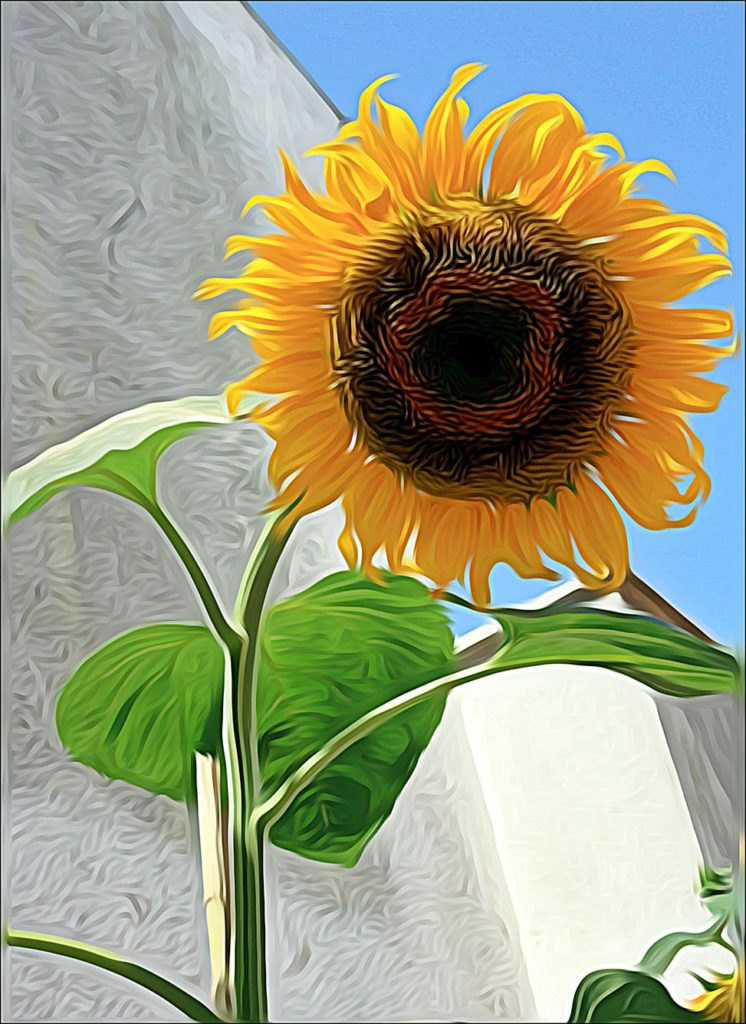Girasole Anzio Paint