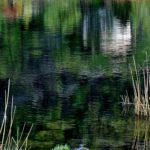 """""""Impressioni di primavera"""", opera fotografica Fine Art su carta, cm 80x100, 2015 1.600 €"""