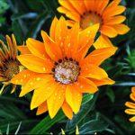 """""""Mosaico"""", fotografia naturale floreale, cm 20x30, 30x40, 40x50, 50x70, 2013"""